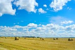 жать пшеницу Стоковые Фотографии RF