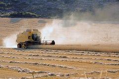 жать пшеницу Стоковое Фото