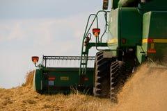 жать пшеницу Стоковое Изображение