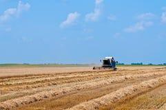 Жать пшеницы Стоковые Изображения