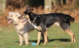 Ждать 2 собак Стоковые Фото