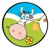 жевать головку цветка коровы Стоковое Изображение RF