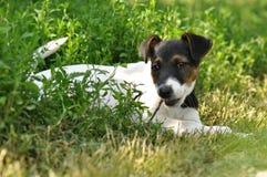Жевать щенка стоковое изображение rf