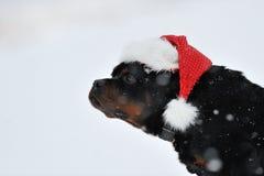 желания rottweiler рождества Стоковое Изображение
