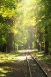 Железная дорога в парке осени Стоковая Фотография RF