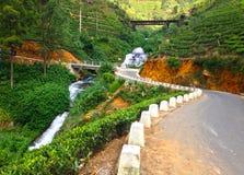 Железная дорога среди плантаций чая и деревень Nanuoya стоковые фотографии rf