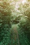 Железная дорога узкой колеи в лесе лета стоковая фотография rf