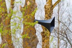 Железная смертная казнь через повешение громкоговорителя на дереве Стоковые Изображения