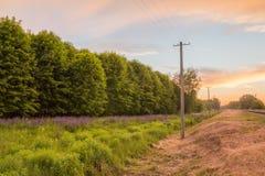 Железнодорожные близко которые растут люпины Стоковые Фотографии RF