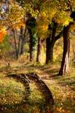 Железнодорожные пути и тропа в золотом лесе в осени стоковые изображения