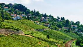 Железнодорожный путь в террасах Швейцарии виноградника Lavaux Стоковые Фотографии RF