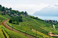 Железнодорожный путь на женевском озере террас виноградника Lavaux в Швейцарии Стоковая Фотография