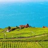 Железнодорожный путь на женевском озере террас виноградника Lavaux Стоковые Фотографии RF