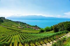 Железнодорожный путь на женевском озере террас виноградника Lavaux Швейцарии Стоковое фото RF
