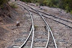 Железнодорожный узел где 2 следа поезда сливают стоковое фото rf
