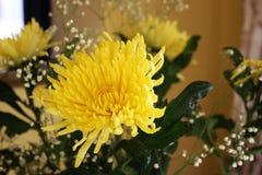 Желтая астра Стоковые Изображения