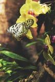 желтая бабочка Стоковые Фотографии RF