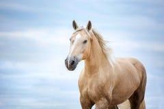 Желтая голова лошади на небе Природа, смотря Стоковое Изображение