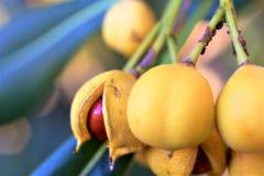 Желтая дикая ягода стоковая фотография rf