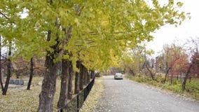 Желтые деревья осени сток-видео