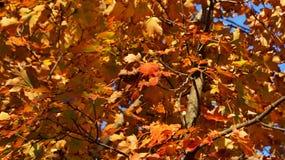 Желтая, зеленая, и оранжевая красная листва леса осени стоковые фотографии rf