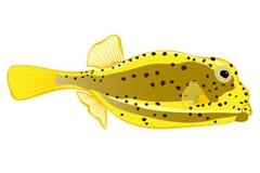 Желтая иллюстрация boxfish Стоковые Изображения RF