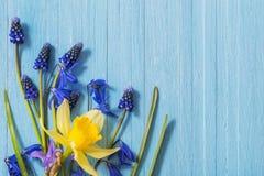 Желтая и голубая весна цветет на деревянной предпосылке Стоковое Изображение RF