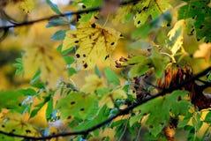 Желтая и зеленая деталь листьев осени стоковая фотография rf