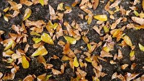 Желтая и коричневая предпосылка листьев Стоковое фото RF