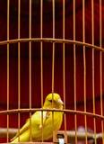 Желтая клетка птицы полета любимца hutch птицы стоковое фото