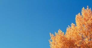 Желтая листва осени Стоковое Изображение