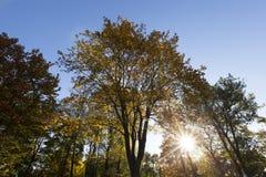 Желтая листва, осень Стоковое Изображение