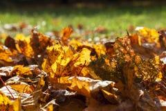 Желтая листва, осень Стоковые Изображения