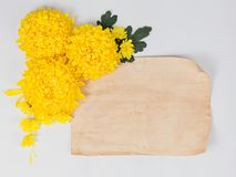 Желтая маргаритка хризантем цветет с постаретым примечанием o чистого листа бумаги Стоковое Изображение
