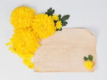 Желтая маргаритка хризантем цветет с постаретым примечанием o чистого листа бумаги стоковая фотография
