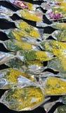 Желтая мимоза для всех женщин во время дня женщин Стоковое Изображение