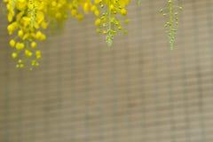 Желтая нерезкость цветка на cream природе предпосылки стоковое изображение