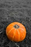 Желтая органическая тыква на предпосылке травы Стоковые Изображения RF