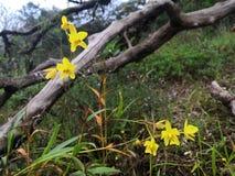 Желтая орхидея в глубоком лесе стоковые фотографии rf