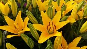 Желтая предпосылка орхидеи Стоковое Фото