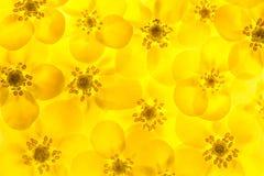 Желтая предпосылка Стоковые Фотографии RF
