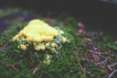 Желтая прессформа леса Стоковые Фотографии RF