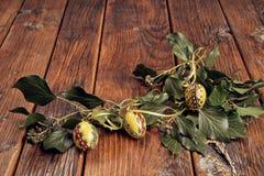 Желтая рука покрасила пасхальные яйца украшенный с зелеными ветвями плюща на годе сбора винограда, деревянном столе с космосом стоковое изображение rf