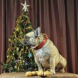 Желтая собака земли для ваш праздновать китайского кануна Нового Годаа с Стоковое Изображение RF