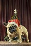 Желтая собака земли для праздновать китайского кануна Нового Годаа с Стоковая Фотография