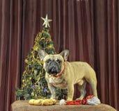 Желтая собака земли приходит для праздновать китайского кануна Нового Годаа с Стоковые Фотографии RF