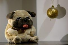 Желтая собака 2018 стоковые фотографии rf