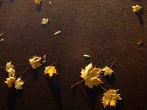 Желтая сухая ложь листьев на асфальте Стоковое фото RF