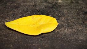 Желтая фотография лист стоковое фото rf