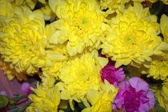 Желтая хризантема смешанная с розовым букетом гвоздики с выборочным фокусом на желтом и розовом цветке стоковое фото